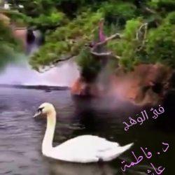 """الجهني"""": تصاعد وتيرة الأمطار خلال الساعات المقبلة.. والموجة تصل الرياض غداً"""