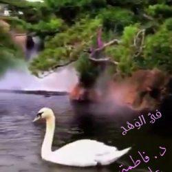الرياض.. القبض على مواطن تورط في إتلاف جهازي صرف آلي